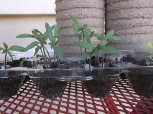seedlings week 3