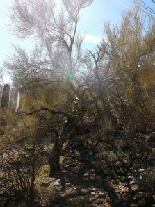 love the twisted and gnarly trees in the desert