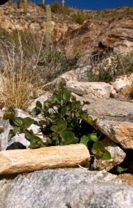 love seeing such pretty green plants growing between rocks...