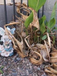 Frost Bitten Lilies