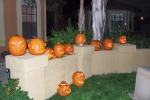 Carved Pumpkins All in a Row