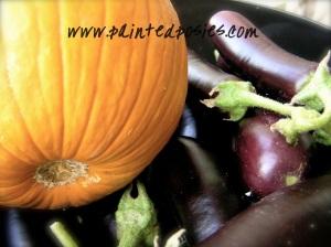 Pumpkin & Eggplant Harvest