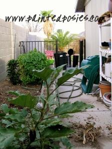 Cinder Block Garden Before