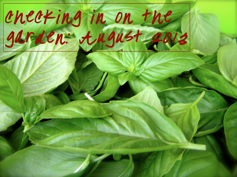 Checking in on the garden: August 2013