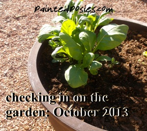 Checking in on the Garden October 2013