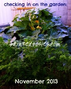Checking In On The Garden: November 2013