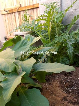 Eggplant and Artichoke