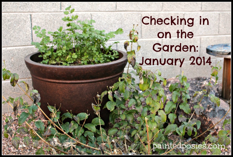 Checking in on the Garden: January 2014