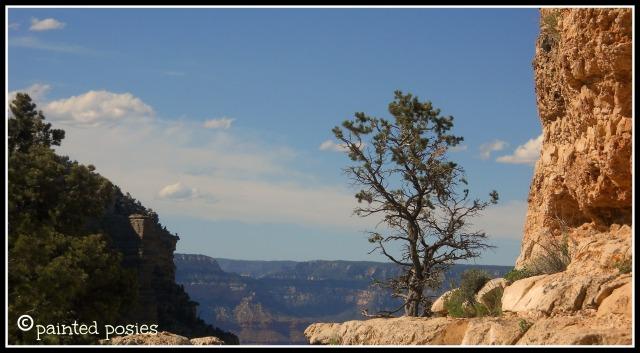 Grand Canyon 2011