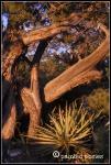 Sunset Grand Canyon 2011
