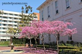 Original USC Building, LA, Californa