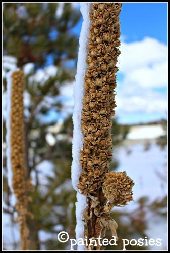 Winter Seed Pod