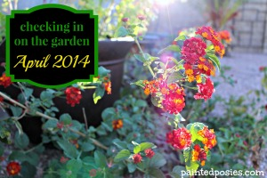 Checking in on the Garden April 2014