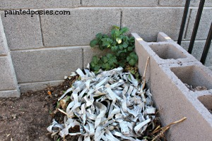 Mystery Growth in the Compost Pile