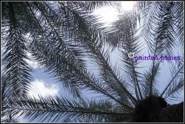 Through the Palms 2010