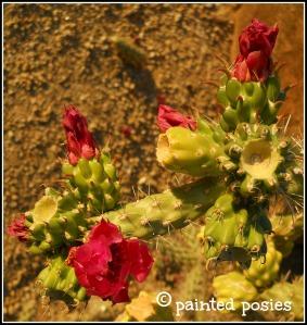 Cactus Flower 2010