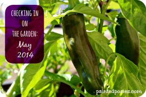 Checking in on the Garden: May 2014