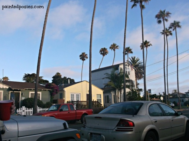 Ocean Beach Palms