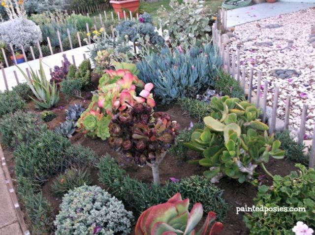 Ocean Beach Succulent Garden