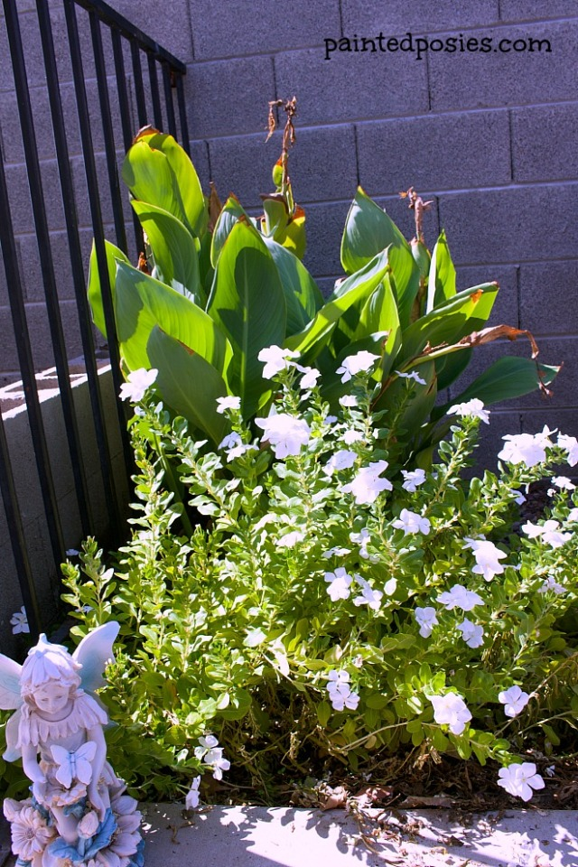 Lily and Vinca August 2014