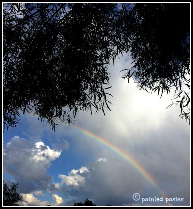 Phoenix Rainbow August 2014
