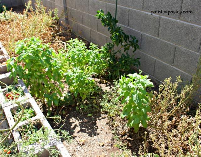 Tomato, Basil, Bell Pepper August 2014