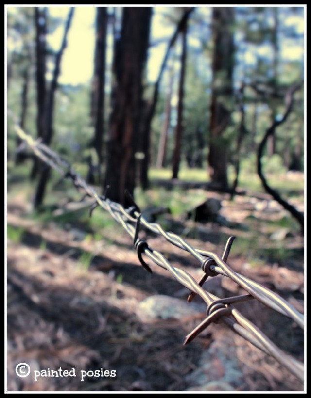 Barbed Wire Fence August 2014