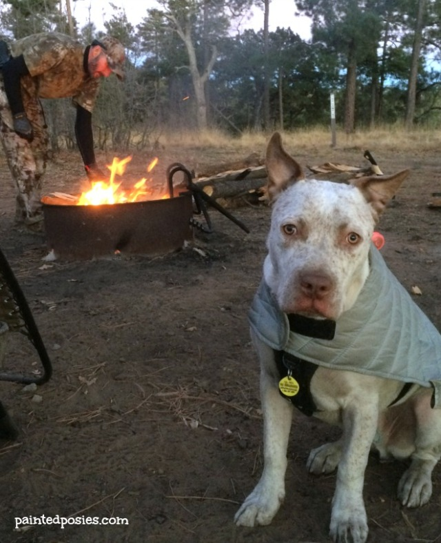 Jones LL Bean Pet Parka Thanksgiving Camping Mogollon Rim
