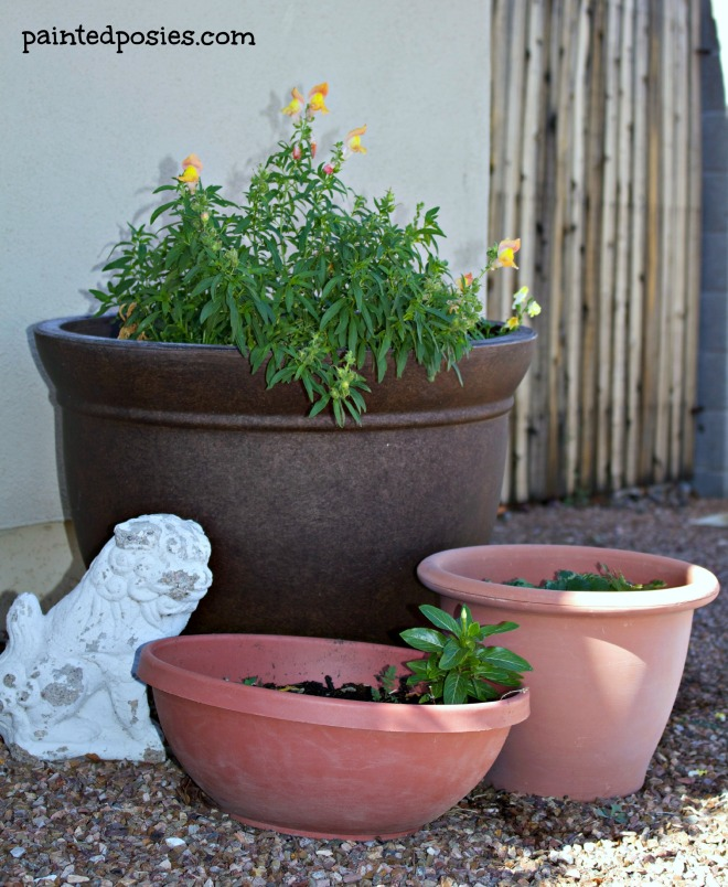 November 2014 Container Gardening Flowers and Strawberry Plant