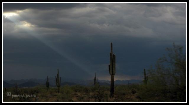 Wandering Eye Wednesday Ray of Light on Cactus