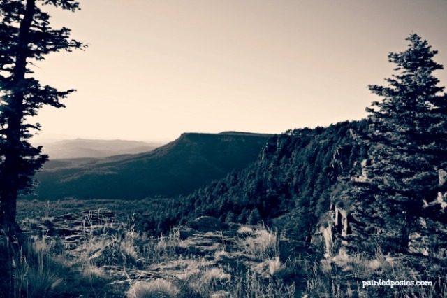 Mogollon Rim Foliage Cliffside November 2014