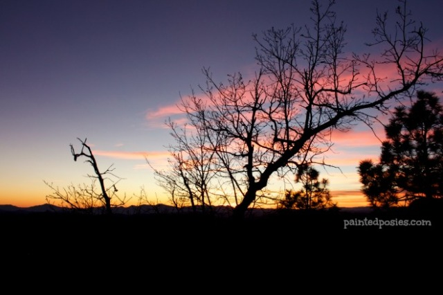 Silhouette Branches at Sunset Mogollon Rim