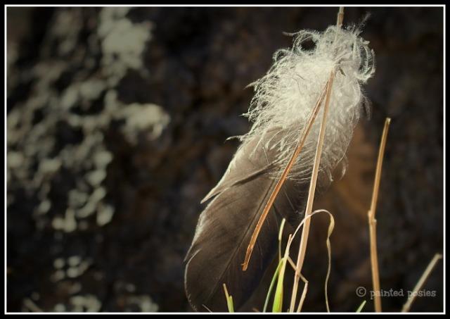 Wandering Eye Wednesday Feather