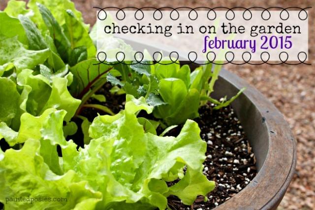 Desert Raised Bed Cinder Block Gardening February