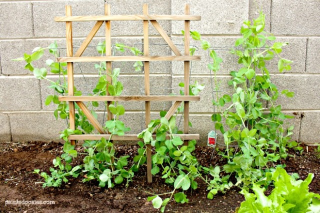 Desert Raised Bed Cinder Block Gardening February Snap Peas
