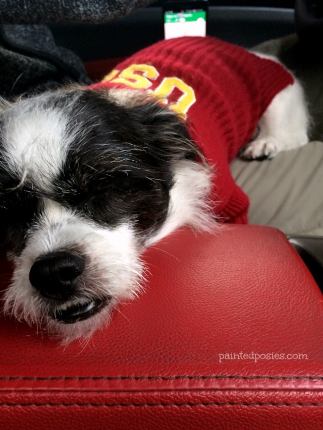 LA California Shitzu USC Dog Sweater