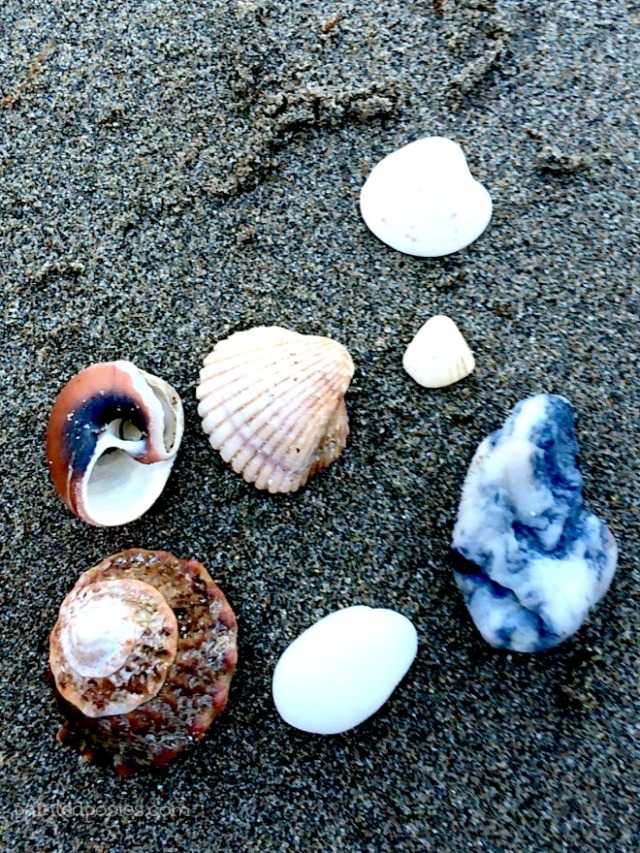 Seashells Catalina Island