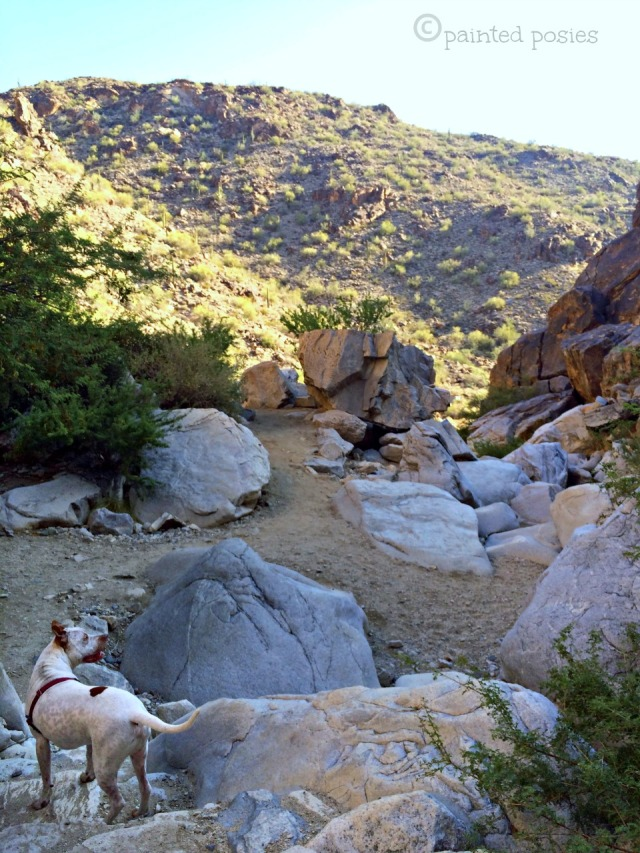 Hiking with Jones