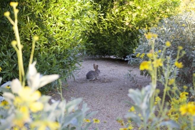 Bunny in Scottsdale