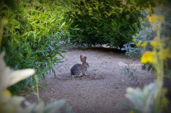 Wandering Eye Wednesday Bunny in Scottsdale