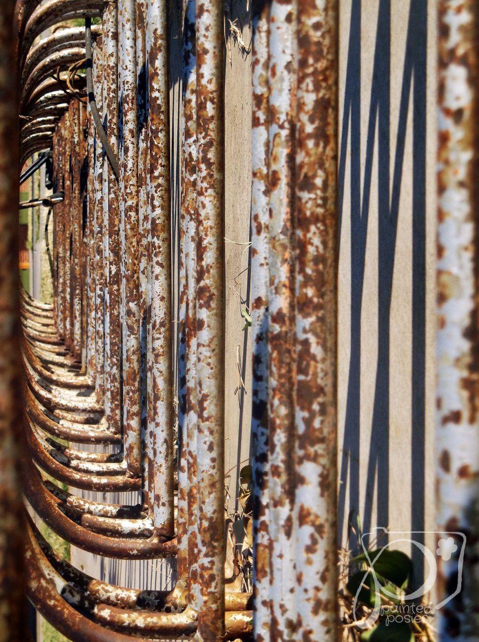 Wandering Eye Wednesday paintedposies.com